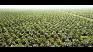 Download Palm Oil - An Environmental Disaster - Ben Dessen Video