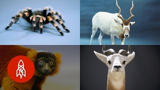 Download These 8 Unique Creatures Are As Rare As They Are Fascinating Video