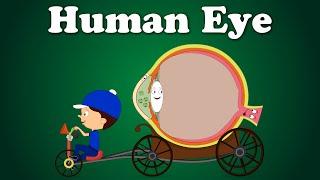 Download Human Eye Video