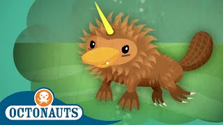 Download Octonauts - Duck Face River Monster | Cartoons for Kids | Underwater Sea Education Video