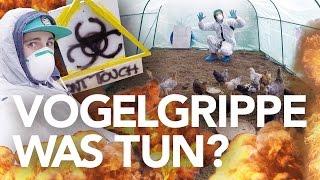 Download Vogelgrippe 2016 - Stallpflicht! Was tun als Geflügeldude? | Heimwerkerking Fynn Kliemann Video