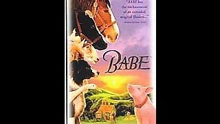 Download Opening To Babe 1998 VHS Video