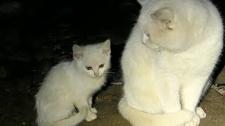 Download 2 Kittens and cats in a dark basement Video