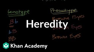 Download Introduction to Heredity Video