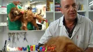 Download ניקוי שיניים כלבים וחתולים דר. דורון נרי וטרינר Video