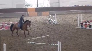 Download Young Horse for Sale: Limited Edition EH - 5 y.o. Holsteiner Gelding - Jumping Training 26.02.2016 Video