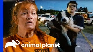 Download A Miracle Dog Rescue During Terrible Floods In Louisiana   Pit Bulls & Parolees Video