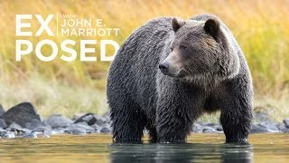 Download EXPOSED Ep. 8: The Politics Behind Being a BC Grizzly Bear Video