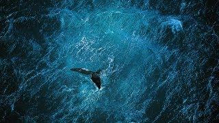 Download Planet Ocean [UK]- the film by Yann Arthus-Bertrand & Michael Pitiot Video