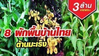 Download มะเร็งยังกลัว 8ผักพื้นบ้านไทย ต้านมะเร็ง หามากินด่วน Video