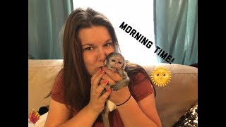 Download Baby monkey morning time | Max's morning Routine Video