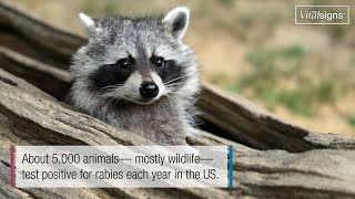 Download Are you at risk for Rabies? Video