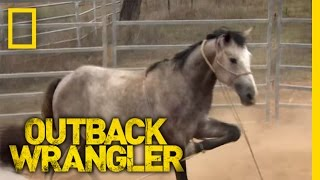 Download Breaking Wild Horses | Outback Wrangler Video