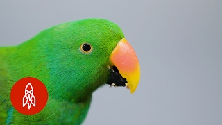 Download This Beautiful Parrot May Be the World's Smartest Bird Video