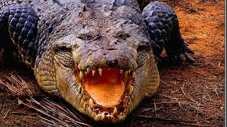 Download Deadly Crocodiles of the Nile River - Nature Documentary Video