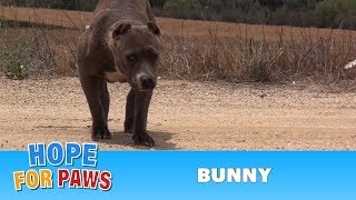 Download Rescuing a scared stranded Pit Bull who was struggling to survive. Please share. Video
