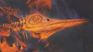 Download 11 AMAZING Fossil Discoveries Video