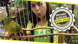 Download BRANDY WATCH : Ibu Rumah Tangga Sukses Bikin Pleci Gacor Durasi Panjang Juara Nasional Video