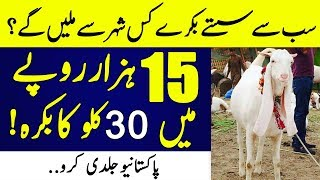 Download Now purchase Most Cheap Goats and Cows in Pakistan for Eid Video
