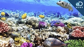 Download What Are Coral Reefs And What's Their Purpose? Video