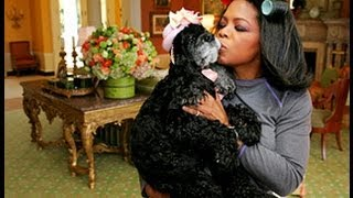 Download Oprah Special on Puppy Mills - MUST SEE! Video