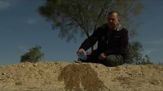 Download Growing Forests in the Desert Video