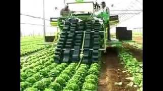Download Nông nghiệp Nhật Bản -Thu hoạch rau tại Nhật Bản Video