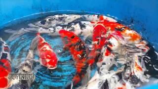 Download 10 ปลาสวยงามน่าเลี้ยง Video