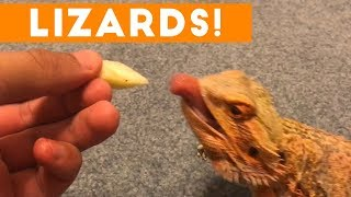Download Funniest Lizard & Reptile Blooper & Reaction Videos of 2017 Weekly Compilation | Funny Pet Videos Video