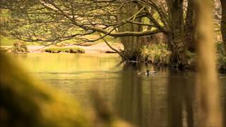 Download Green and Pleasant Land: birdwatching with Bill Bailey Video