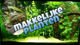 Download Makkelijke AQUARIUM PLANTEN voor beginners //Nickey// Video