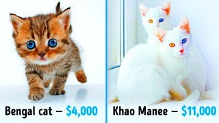 Download 19 Awesome Cats That Cost a Fortune Video