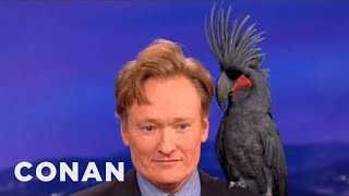 Download Animal Expert David Mizejewski: Black Palm Cockatoo & Crocodile - CONAN on TBS Video