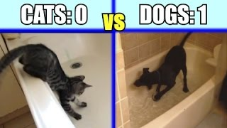 Download Cats vs. Dogs: Which animal is the funniest - Funny Comparison / Compilation PART 1 Video