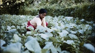 Download Nepal: Copying with Climate Change, Addressing Migration Video