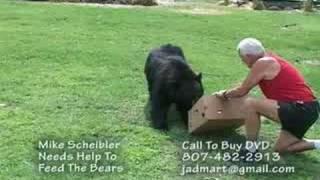 Download Wild bear feeding by hand Video