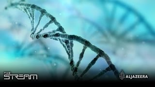 Download The Stream - The DNA ancestry craze Video