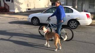 Download Bike Ride With Your Dog Video