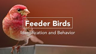 Download Celebrate Your Feeder Birds Video