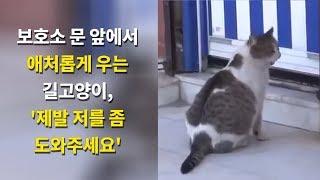 Download 문앞에서 울부짓으며 도와 달라는 길고양이, 잠시 후 놀라운 일이.. Video