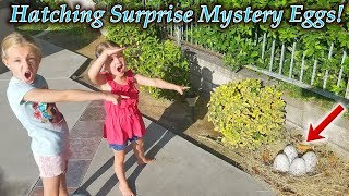 Download Mystery Eggs Found by Pool Hatch!!! Hatchimals Mystery Eggs! (New Pets) Video