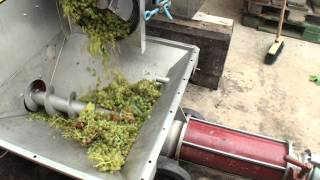 Download Domaine d'Aupilhac: le cheminement du raisin vers le pressoir et le premier nectar Video