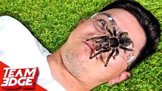 Download Don't Flinch! | Dangerous Live Animals!! Video