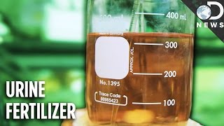 Download How Your Pee Could Help Billions Of People Video