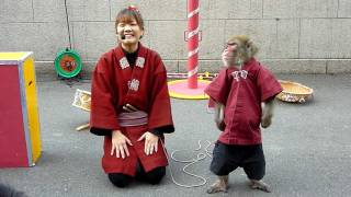 Download Monkeys show at Tokyo tower Video