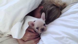 Download Rich Surprises Sara! French Bulldog Puppy Video