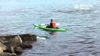 Download Saving Sea Otter 696: The Rescue Video