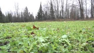Download Discovering - Wildlife Habitat Management Video