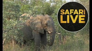 Download safariLIVE - Sunrise Safari - May 28, 2018 Video