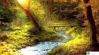 Download 8 HOURS of Relaxing Music Meditation, Sleep, Spa, Study, Zen 2016 Video